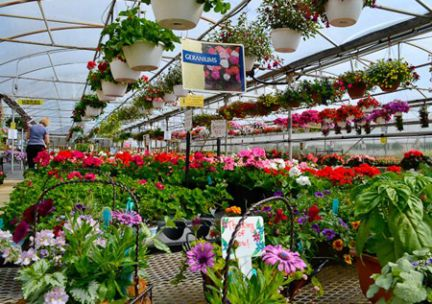 Schuring Greenhouse Fundraising