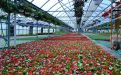John Schuring Jr. Co. Greenhouses
