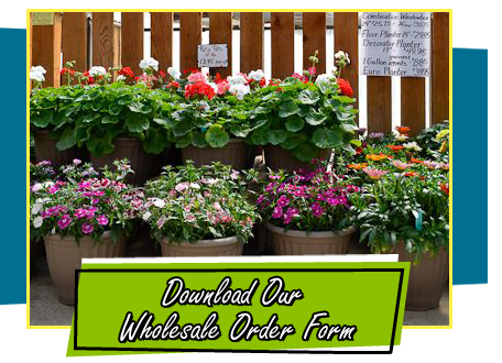 Download Our Wholesale Order Form